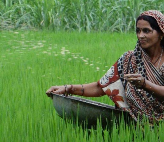 The Forgotten Female Farmers Of India: Narratives From Bihar
