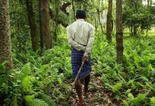No Talking About The Environment Without Indigenous People's Rights