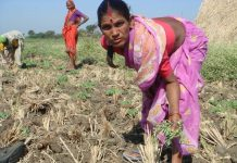 How Is The Agrarian Distress In Maharashtra Affecting Women