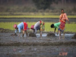 The Impact Of Customary Laws On Women Farmers In India