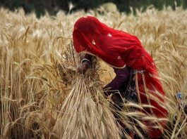 Women Contribute Hugely In Agriculture, But Are Still Overlooked As 'Farmers'