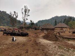 Impact of pandemic on Van Gujjars