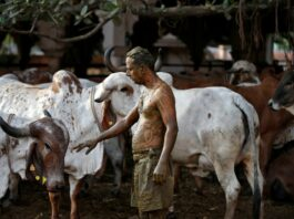 Cow Urine, Cow Dung: Navigating Misinformation on Covid cure