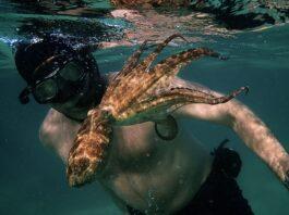 Film Review: My Octopus Teacher—93rd Academy Award Winning Documentary
